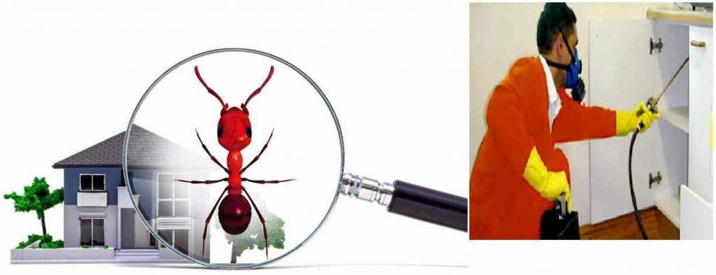 شركة مكافحة حشرات في كلباء