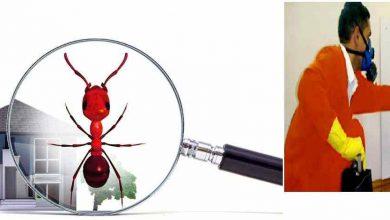 Photo of شركة مكافحة حشرات في كلباء بالشارقة 0569795951