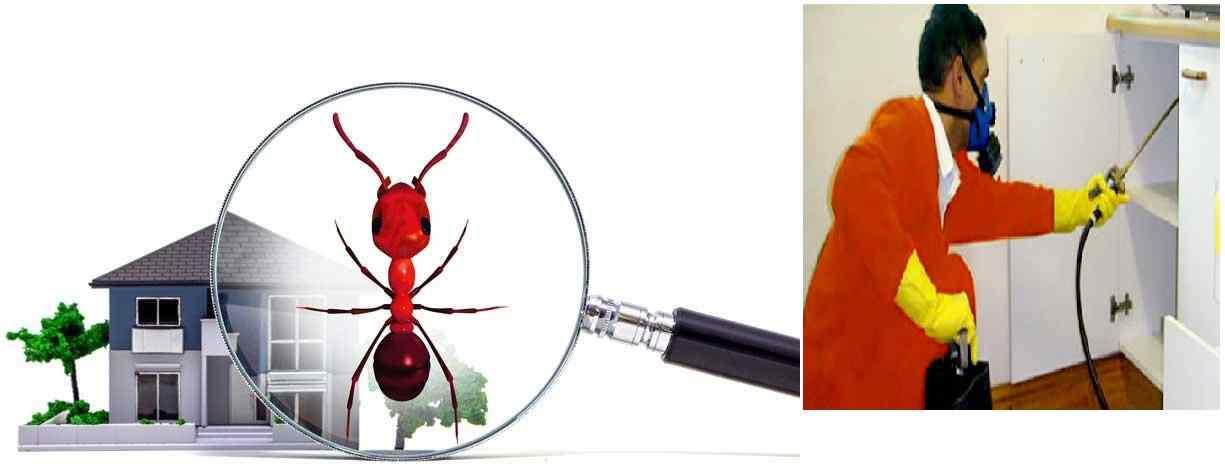 شركة مكافحة حشرات في كلباء بالشارقة