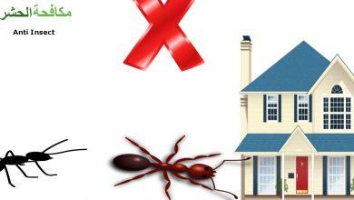 Photo of شركة مكافحة الحشرات بعجمان  0569795951