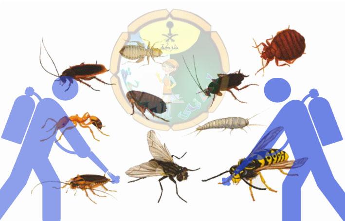شركة مكافحة الحشرات بالقرائن
