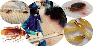 Photo of شركة مكافحة حشرات في مليحة 0569795951