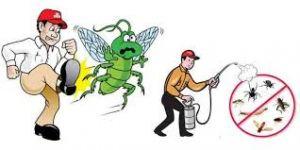 مكافحة حشرات عجمان