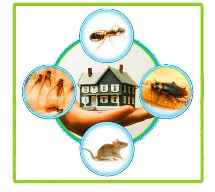 مكافحة حشرات بعجمان - رش مبيدات بعجمان